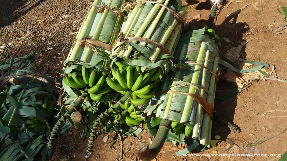bananas-at-the-market