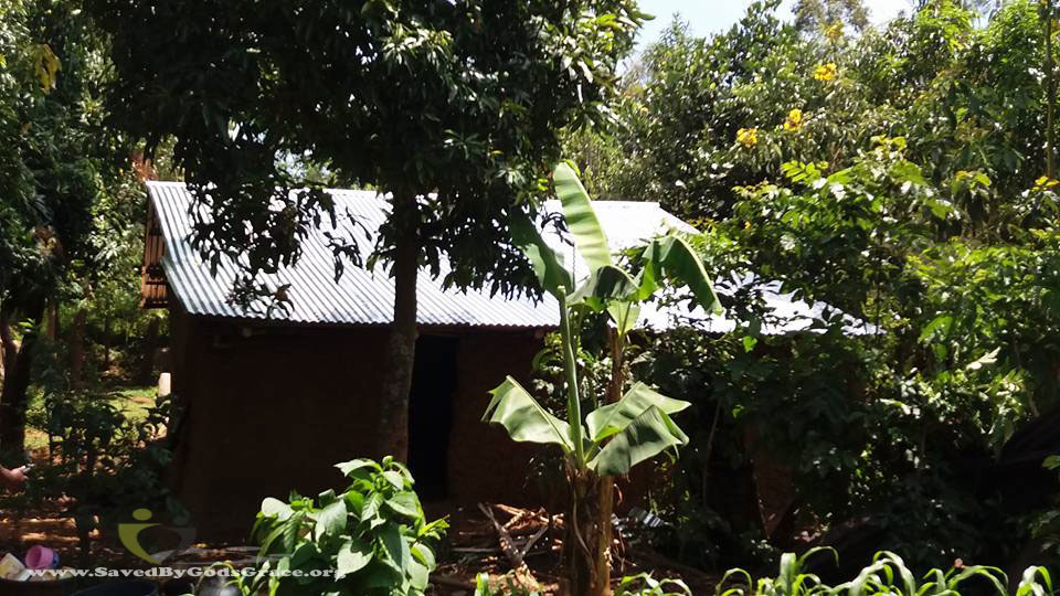 new-roof-in-the-bush